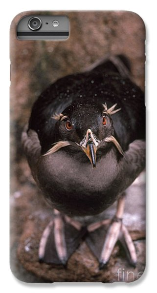 Auklets iPhone 6s Plus Case - Rhinoceros Auklet by Art Wolfe