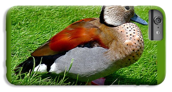 Ringed Teal Drake IPhone 6s Plus Case