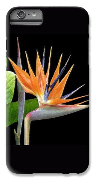 Crane iPhone 6s Plus Case - Royal Beauty I - Bird Of Paradise by Ben and Raisa Gertsberg
