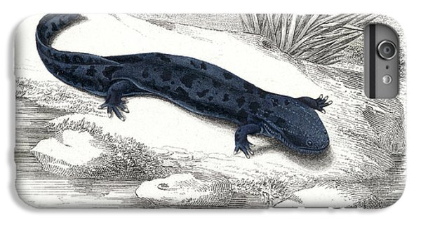 Salamanders iPhone 6s Plus Case - Salamander by Collection Abecasis