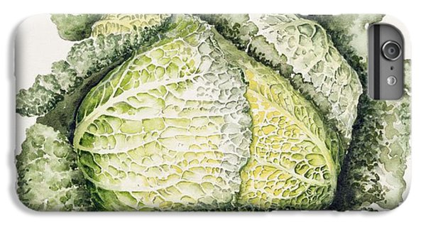 Savoy Cabbage  IPhone 6s Plus Case by Alison Cooper