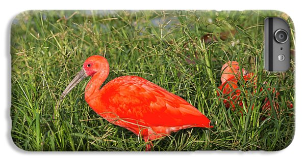 Ibis iPhone 6s Plus Case - Scarlet Ibis (eudocimus Ruber by Keren Su
