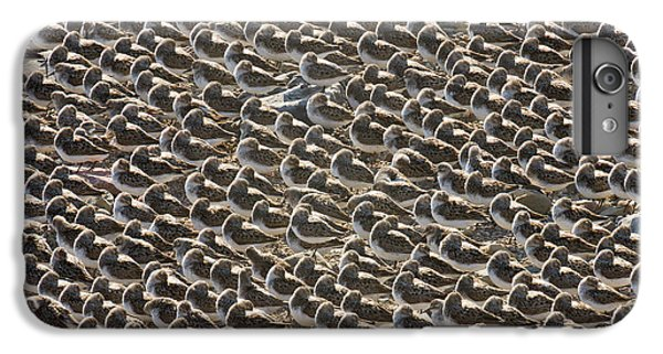 Semipalmated Sandpipers Sleeping IPhone 6s Plus Case by Yva Momatiuk John Eastcott
