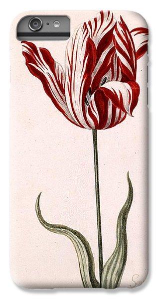 Tulip iPhone 6s Plus Case - Semper Augustus by Celestial Images