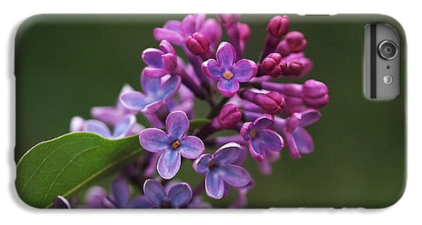 Shades Of Lilac  IPhone 6s Plus Case by Rona Black