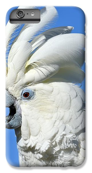 Shady Umbrella IPhone 6s Plus Case by Tony Beck