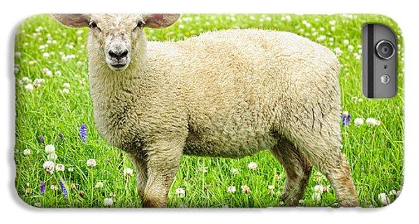 Sheep In Summer Meadow IPhone 6s Plus Case by Elena Elisseeva