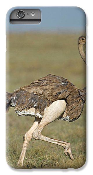 Ostrich iPhone 6s Plus Case - Side Profile Of An Ostrich Running by Panoramic Images