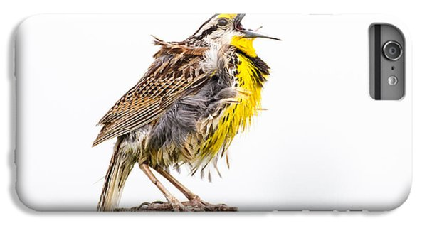 Singing Meadowlark 3rd Of 3 IPhone 6s Plus Case by Bill Swindaman