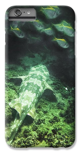 IPhone 6s Plus Case featuring the photograph Sleeping Wobbegong And School Of Fish by Miroslava Jurcik