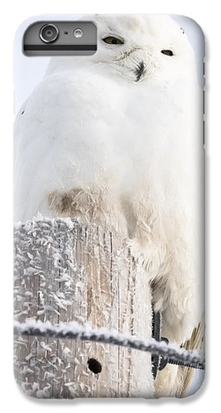 Snowy Owl IPhone 6s Plus Case