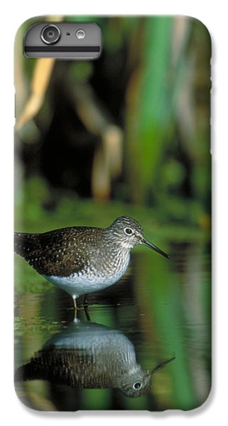 Solitary Sandpiper IPhone 6s Plus Case