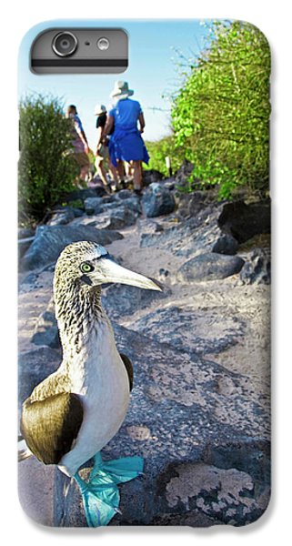 Boobies iPhone 6s Plus Case - South America, Ecuador, Galapagos by Miva Stock