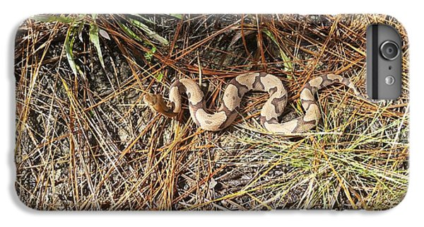 Southern Copperhead IPhone 6s Plus Case by JC Findley