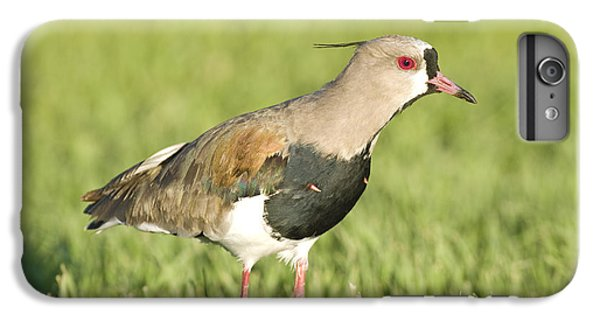 Lapwing iPhone 6s Plus Case - Southern Lapwing by William H. Mullins
