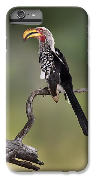 Southern Yellowbilled Hornbill IPhone 6s Plus Case by Johan Swanepoel
