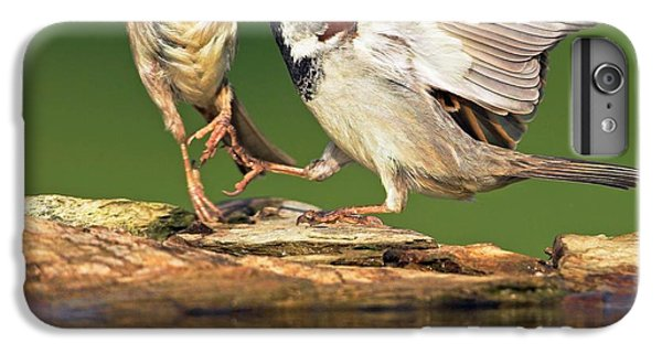 Sparrows Fighting IPhone 6s Plus Case by Bildagentur-online/mcphoto-schaef