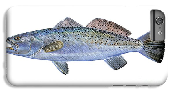 Drum iPhone 6s Plus Case - Speckled Trout by Carey Chen
