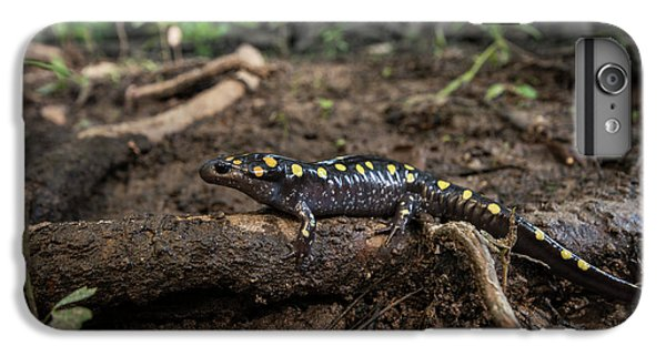 Salamanders iPhone 6s Plus Case - Spotted Salamander (ambystoma Maculatum by Pete Oxford
