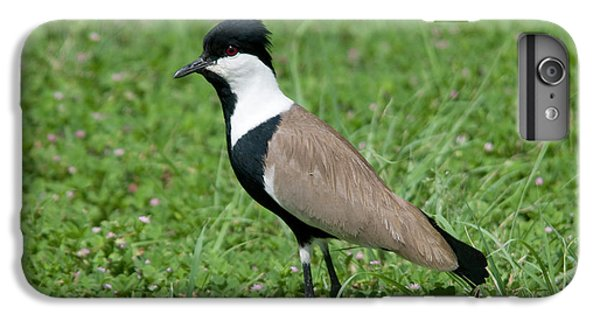 Lapwing iPhone 6s Plus Case - Spur-winged Plover by Nigel Downer