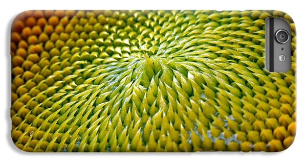 Sunflower  IPhone 6s Plus Case by Christina Rollo