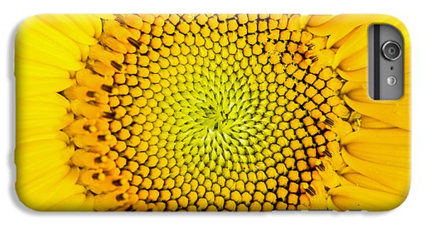 Sunflower iPhone 6s Plus Case - Sunflower  by Edward Fielding