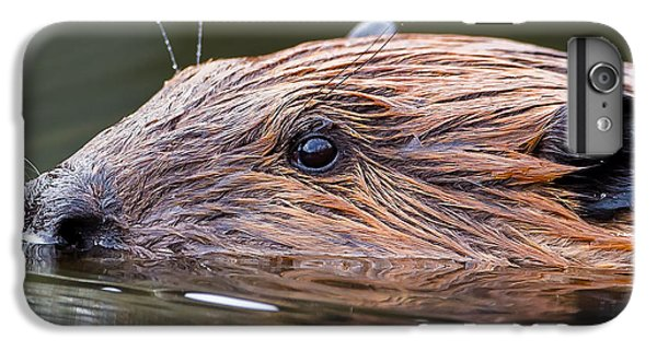 The Beaver Square IPhone 6s Plus Case by Bill Wakeley