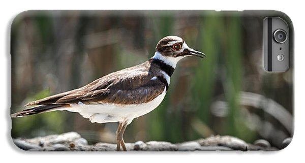 The Killdeer IPhone 6s Plus Case