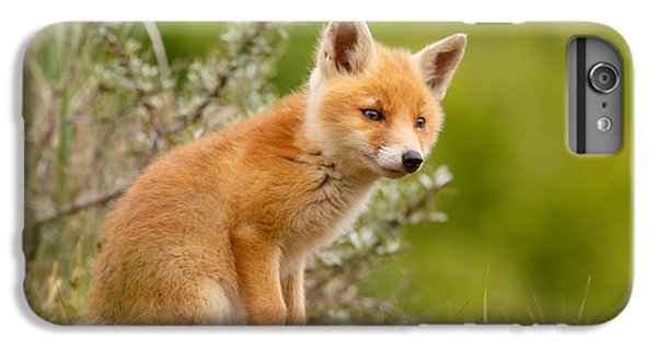 Fox iPhone 6s Plus Case - The New Kit ...curious Red Fox Cub by Roeselien Raimond