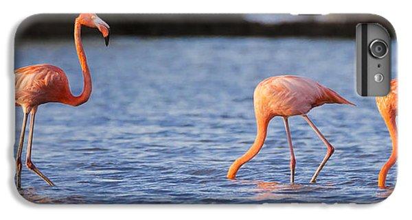 The Three Flamingos IPhone 6s Plus Case by Adam Romanowicz