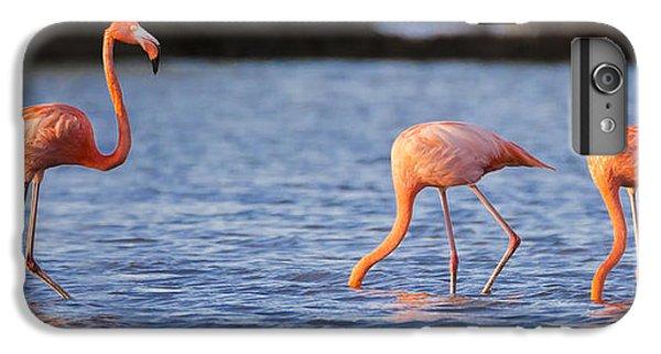 The Three Flamingos IPhone 6s Plus Case