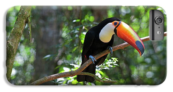 Toco Toucan (ramphastos Toco IPhone 6s Plus Case by Andres Morya Hinojosa