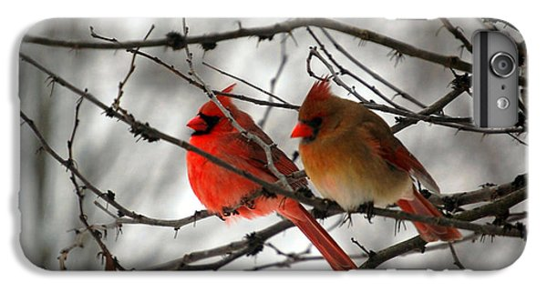 Cardinal iPhone 6s Plus Case - True Love Cardinal by Peggy Franz