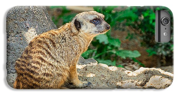 Watchful Meerkat IPhone 6s Plus Case by Jon Woodhams