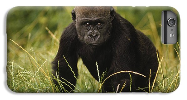 Western Lowland Gorilla Juvenile IPhone 6s Plus Case by Gerry Ellis