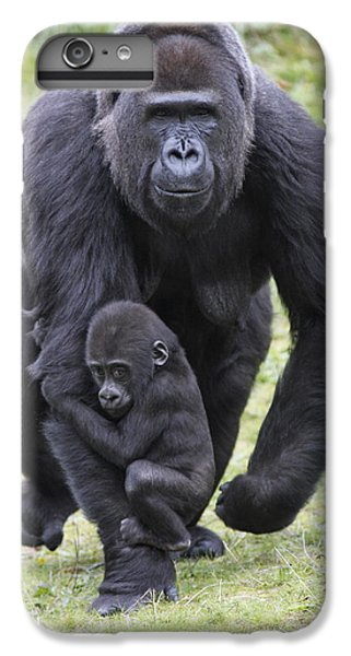Western Lowland Gorilla Walking IPhone 6s Plus Case by Duncan Usher