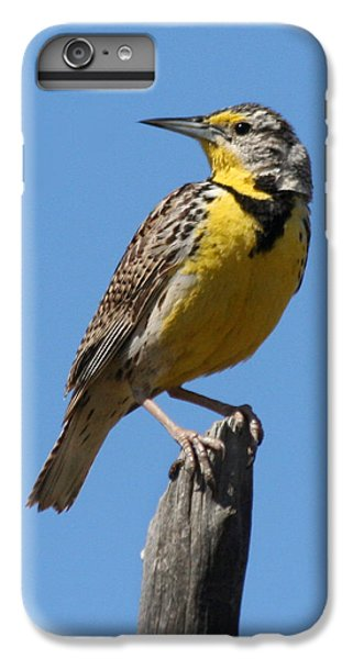 Western Meadowlark Perching IPhone 6s Plus Case