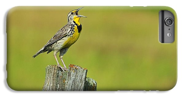 Western Meadowlark IPhone 6s Plus Case by Tony Beck