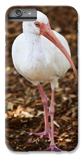 Ibis iPhone 6s Plus Case - White Ibis by Adam Romanowicz
