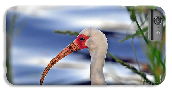 Intriguing Ibis IPhone 6s Plus Case by Al Powell Photography USA