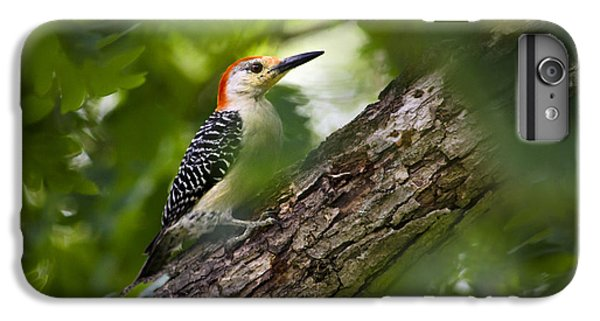 Red Bellied Woodpecker IPhone 6s Plus Case by Christina Rollo