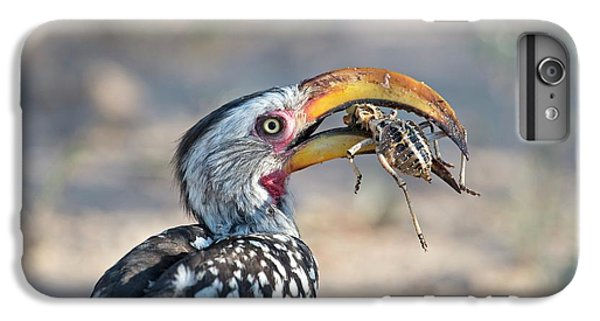Yellow-billed Hornbill Eating A Cricket IPhone 6s Plus Case
