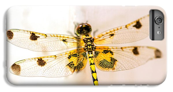 Dragon iPhone 6s Plus Case - Yellow Dragonfly Pantala Flavescens by Iris Richardson