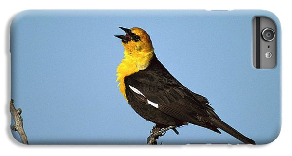 Yellow-headed Blackbird Singing IPhone 6s Plus Case by Tom Vezo