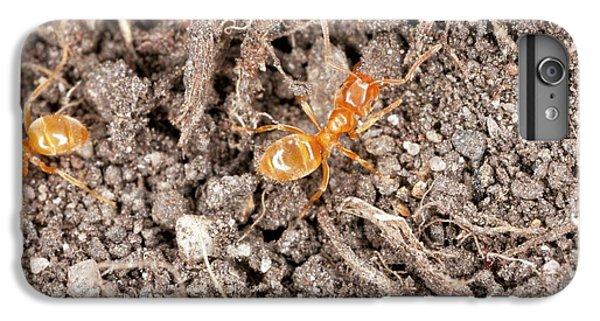 Yellow Meadow Ants IPhone 6s Plus Case