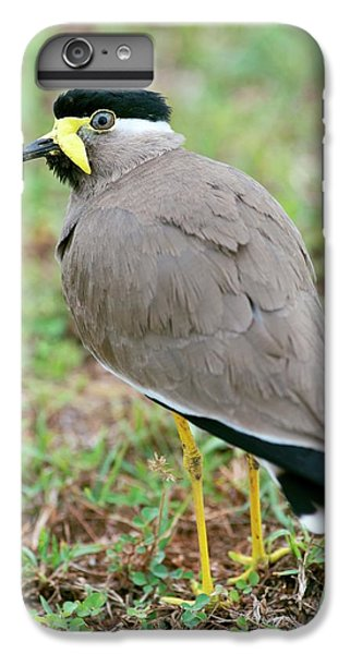 Lapwing iPhone 6s Plus Case - Yellow Wattled Lapwing by Tony Camacho