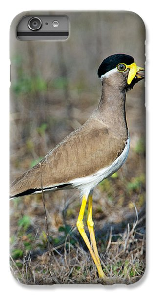 Lapwing iPhone 6s Plus Case - Yellow-wattled Lapwing Vanellus by Panoramic Images