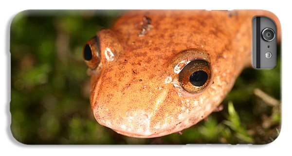 Spring Salamander IPhone 6s Plus Case by Ted Kinsman