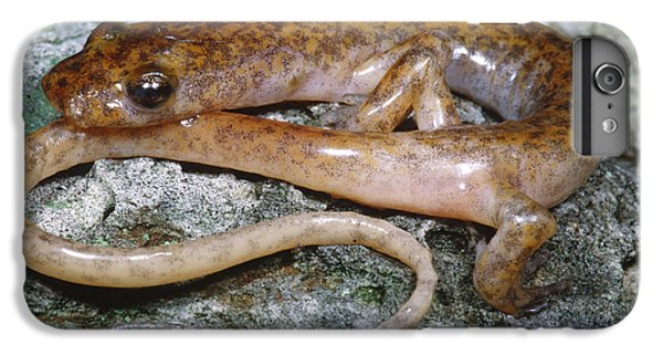 Cave Salamander IPhone 6s Plus Case by Dante Fenolio