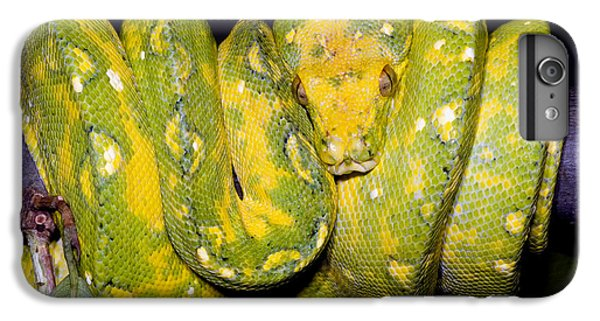 Green Tree Python IPhone 6s Plus Case by Dante Fenolio